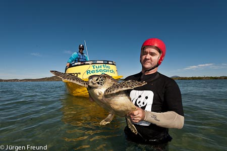 """Charles Stevens of WWF-Australia catches a green turtle as part of """"turtle rodeo"""" research activity in Bowen QLD with JCU volunteer Ron Goodwin expertly assisting with the boat chase."""