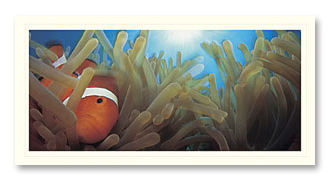 Clownfish foto card