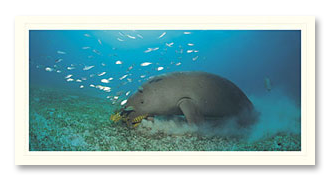 dugong foto card