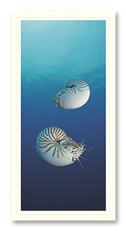 Nautilus foto crad