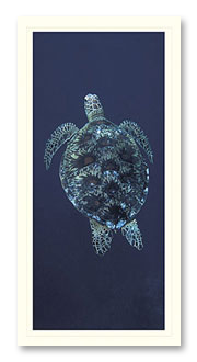 Green Turtle foto card