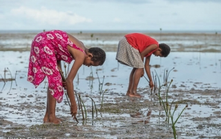 Children of Kavewa Island start a mangrove planting activity with freshly picked mangrove propagules.