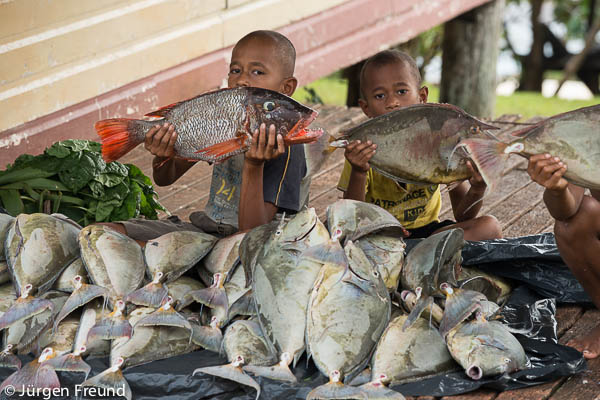Massive fish catch caught the night before by 6 men spear fishing. Fish is for community first Sunday of the month lunch after church service.