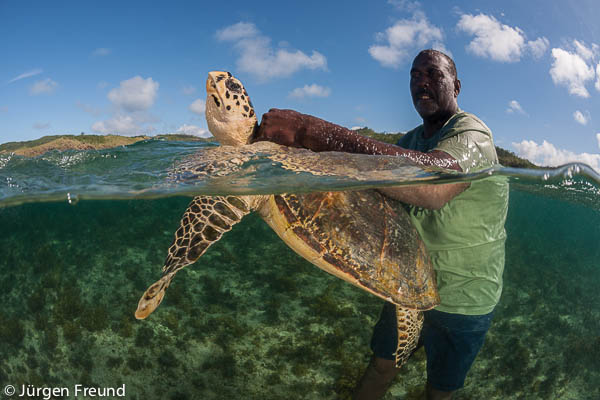 Turtle monitor Peter Qarau catches, tags, measures and releases a green se turtle along with 11 year old Irris and her mom Patricia Mallam of WWF South Pacific in Yadua Island