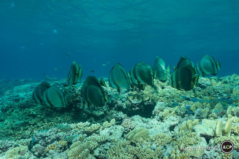 Reef: Yonge Reef