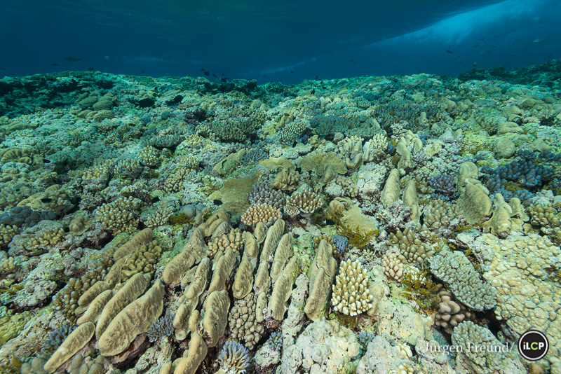 Coral growth is forced into interesting elongated and stunted shapes in the surge and surf zone on top of the outer Great Barrier Reef.