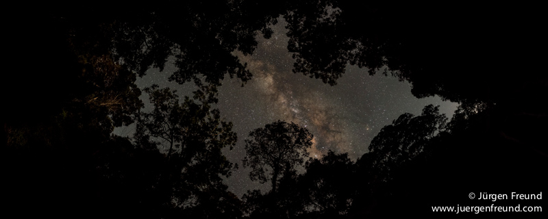 Milky Way trough rainforest canopy
