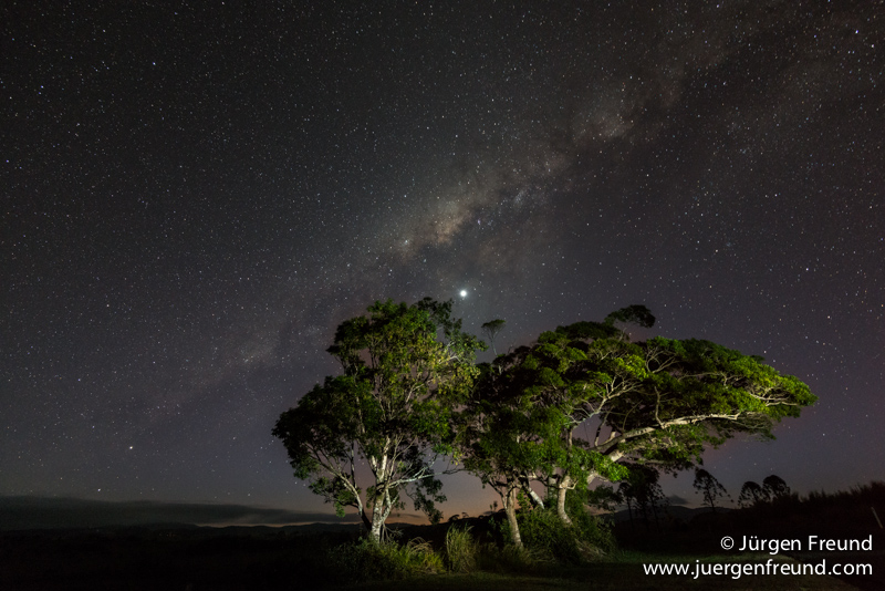 Milky Way and trees in the Atherton Tablelands