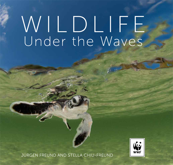 Wildlife Under the Waves-Front Cover600