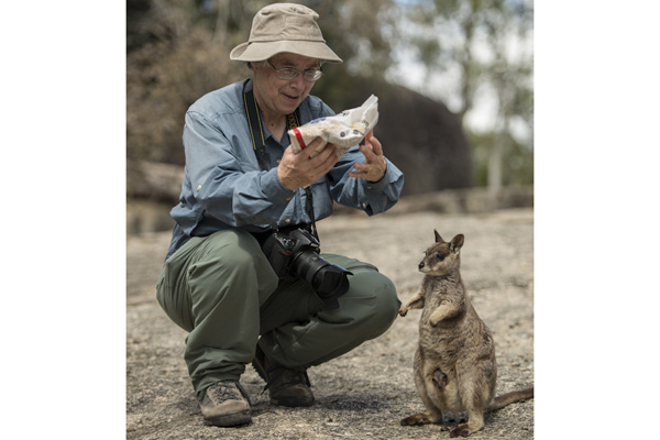 Carol with her bag of rolled oats and Mareeba Rock wallaby mom and joey patiently waiting for a feed